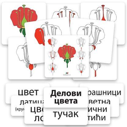 edukativne-kartice-delovi-cveta