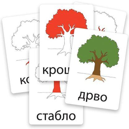 edukativne-kartice-delovi-drveta