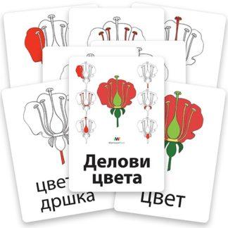 montesori-nomenklaturne-kartice-delovi-cveta