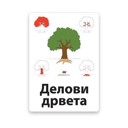 montesori-nomenklaturne-kartice-delovi-drveta-2