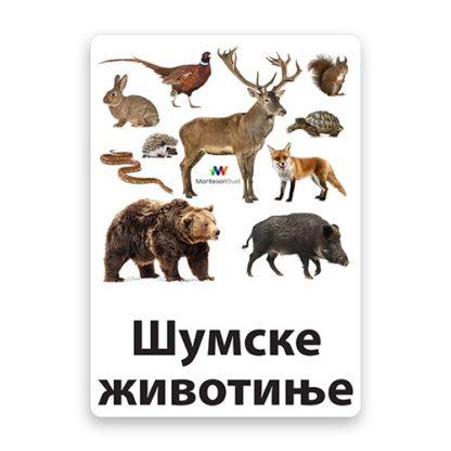 edukativne-kartice-šumske-životinje