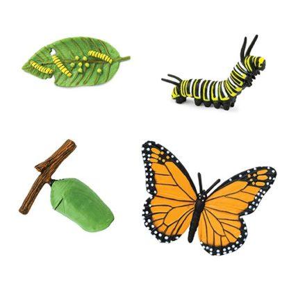 Životni ciklus leptira Safari