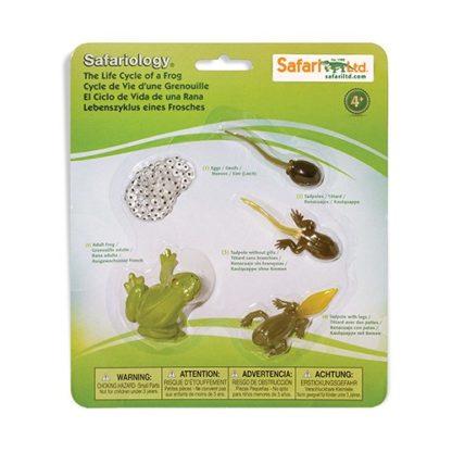 Životni ciklus žabe - Safari