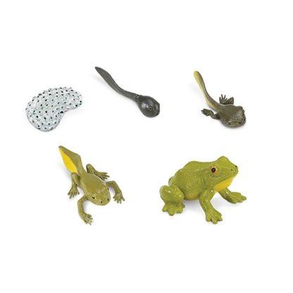 Edukativne figurice Životni ciklus vodozemaca
